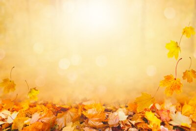 Obraz Autumn landscape, beautiful city park with fallen yellow leaves.