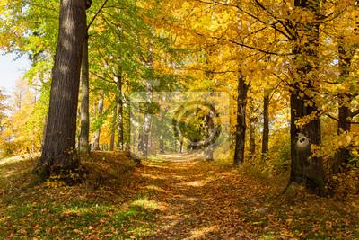 Obraz Autumn maple leaf isolated on nature background