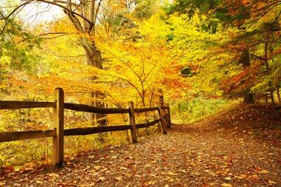 Obraz Autumn scene