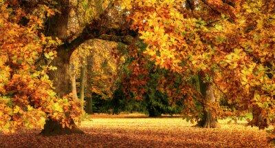 Obraz Autumn scenery with a magnificent oak tree
