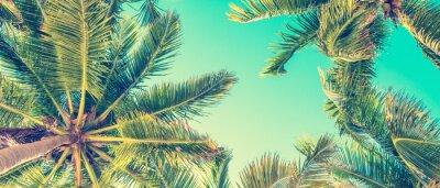 Obraz B ?? kitne niebo i palmy widok z do? U, zabytkowe stylu, latem panoramiczne t? A