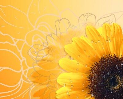 Obraz background Sunflower