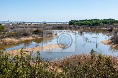 Bagna rzeki Odiel z krzewów, drzew i bagna