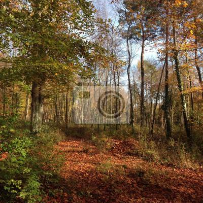 Balade en Foret, Fontainebleau