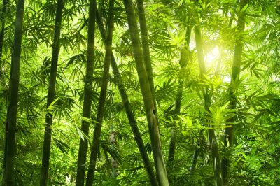 Bamboo forest .