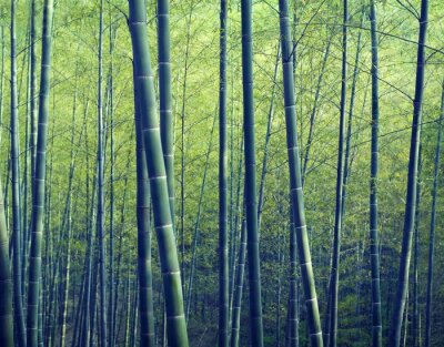 Obraz Bamboo Forest drzewa Natura Koncepcje