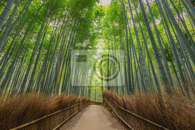 Obraz Bamboo Forest w Kyoto, Japonia