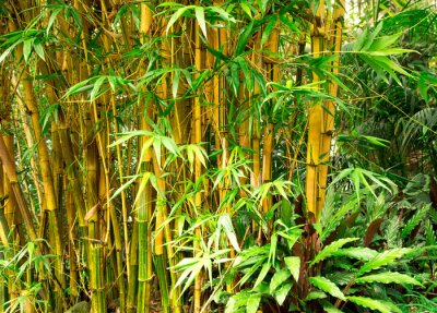 Obraz Bamboo tle