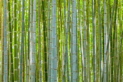 Obraz Bambus tła w przyrodzie w dniu