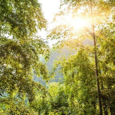 Obraz Bambus w zachodzie słońca