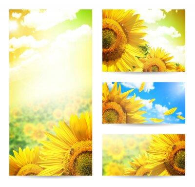Obraz Banner Lato czy tła z kwiatów słonecznika