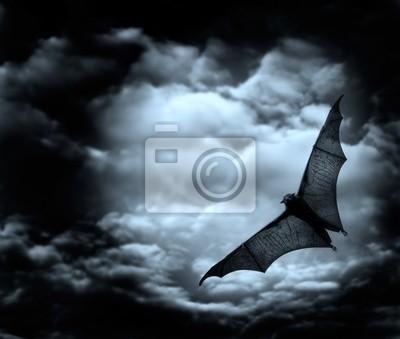 bat latania w ciemnym nieba