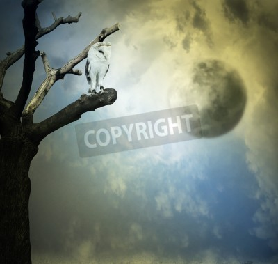 Obraz Beautiful artistic background representing a barn owl on a tree with beautiful sky with planets on the background
