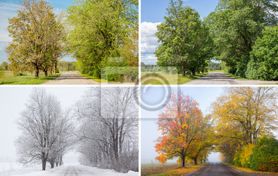 Obraz Beautiful collage of 4 seasons, different pictures of an tree avenue, same spot, place. Spring foliage, green fresh bright summer day, foggy morning with yellow autumn leaves, snowstorm in winter.
