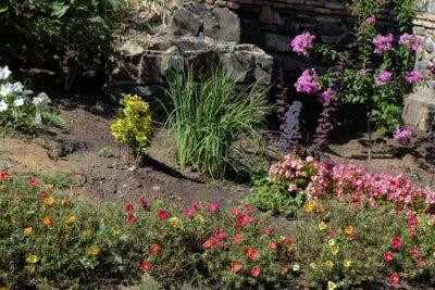 Obraz Beautiful fresh flowers as a nature background