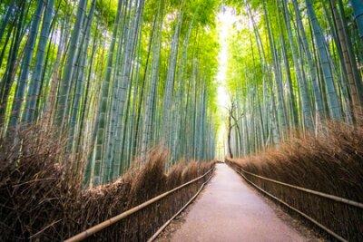 Obraz Beautiful landscape of bamboo grove in the forest at Arashiyama Kyoto Japan