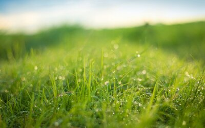 Obraz Beautiful nature background. Fresh grass scene and dew in morning time.