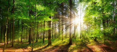 Obraz Beautiful rays of sunlight in a green forest