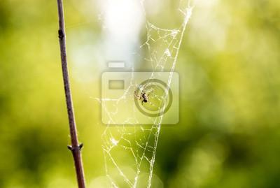 Bei der Arbeit Spinne