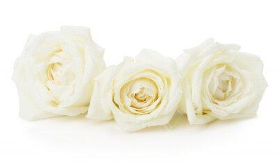 Obraz białe róże na białym tle