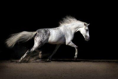 Obraz Biały koń z długą grzywą w pustynnym kurzu kłusie