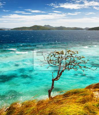 Obraz Biały piasek plaży. Malcapuya wyspa, Filipiny