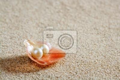 biały piasek plaży muszli małż makro perła