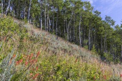 Bierstadt Moraine Aspens and Wildflowers