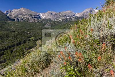 Bierstadt Moraine Polne kwiaty i Continental Divide