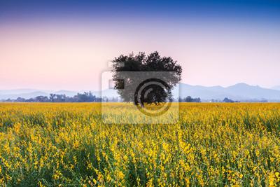 Big Tree w Sunhemp kwiaty pola