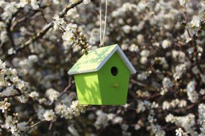 Obraz Birdhouse in a flowering bush