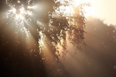 Obraz Birkenblätter im Herbstlicht