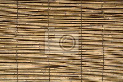 Obraz Bliska widok szczegółowy z wikliny