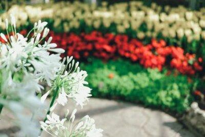 Obraz blooming flower plant in botany garden park