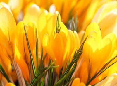 Obraz Bogate wiosenne kwiaty