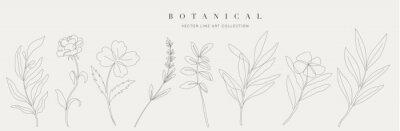Obraz Botanical arts. Hand drawn continuous line drawing of abstract flower, floral, ginkgo, rose, tulip, bouquet of olives. Vector illustration.