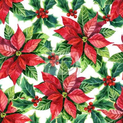 Boże Narodzenie poinsecja, akwarela kwiat
