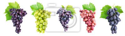 Obraz Branch of grapes isolated on white background