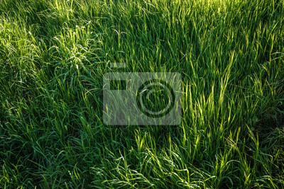 Bujne trawy 1