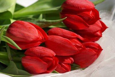 Obraz bukiet czerwonych tulipanów na białym materiale