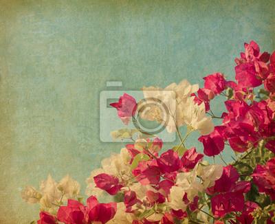 Bush kwiatów bugenwilli w stylu retro