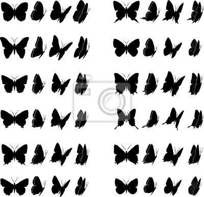 Obraz Butterfly Collection 2