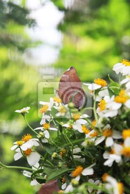 Butterfly na kwiat.