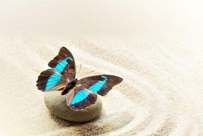 Obraz Butterfly Prepona Laerte na piasku