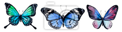 Obraz Butterfly watercolor, clipart butterflies
