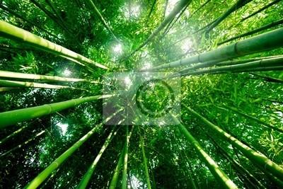 Było Bambou forêt