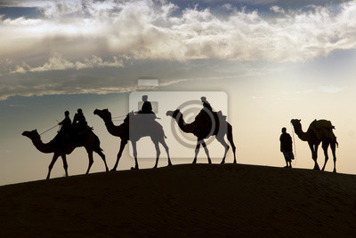 Camel jazdy w pustyni Thar