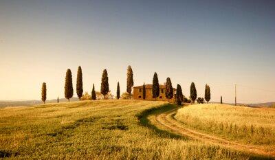 Obraz Campo di Grano e Cipressi, Toscana