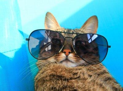 Obraz cat noszenie okularów