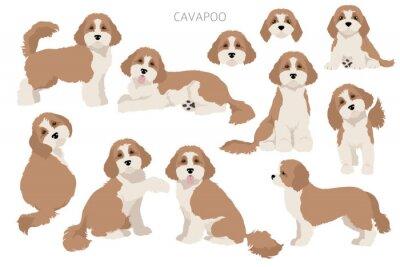 Obraz Cavapoo mix breed clipart. Different poses, coat colors set